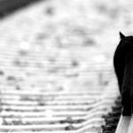 Понимает кошка