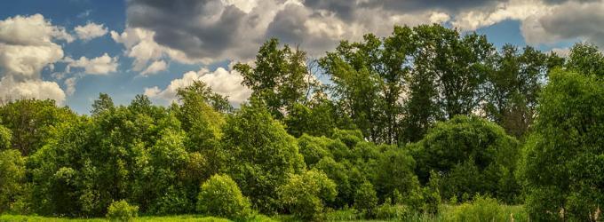 Природа закатила рукава - природа, стихи о природе, природы, лирика
