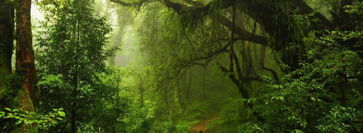 Нашествие джунглей