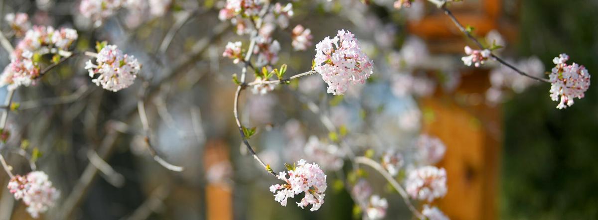 Весна - редьярд киплинг, сказка