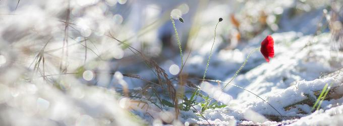 Ты когда-нибудь видел снежинки в начале лета?
