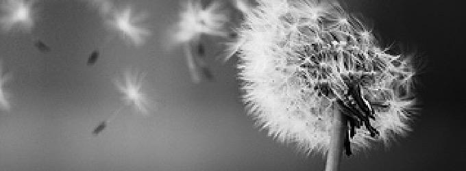 Одуванчики - поэзия, о жизни, философская лирика