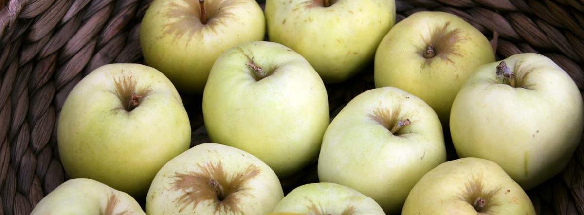 Антоновские яблоки краткое содержание