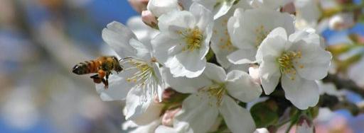 Ожидание весны