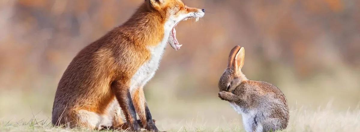 Лиса и заяц - сказка