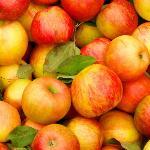 О молодильных яблоках и живой воде