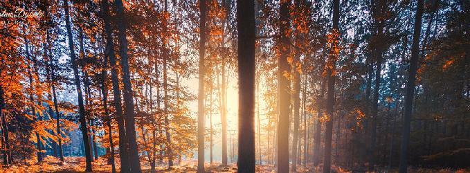 Очень осень