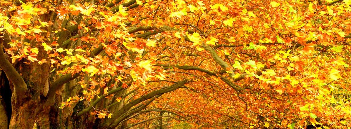 Осеннее святое божоле