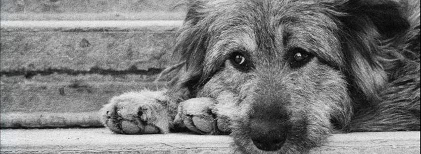 Совесть-пес