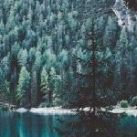 Леса хранимы тишиной