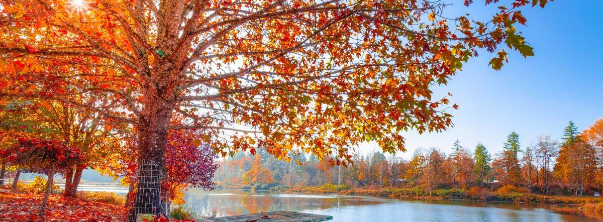 Осень - осень, стихи для детей, природа, короткие стихи, времена года