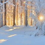 Зима, Крестьянин, торжествуя