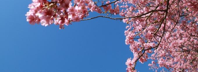 Весна - мечта, о жизни, весна