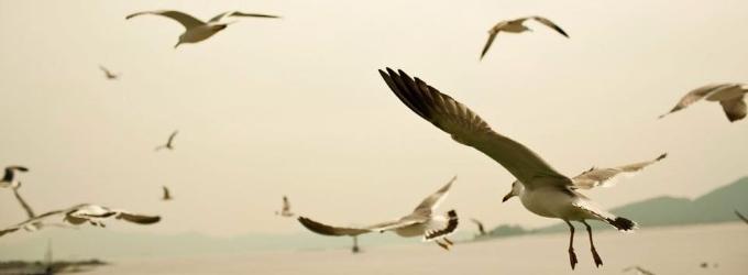 Птичье вдохновение