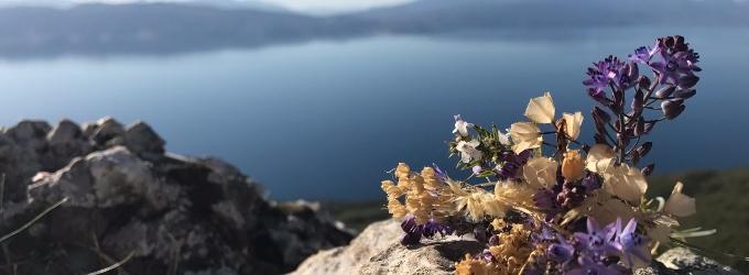 Из жизни цветка
