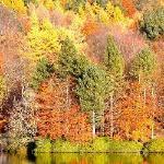 Осень целует верхушки берез