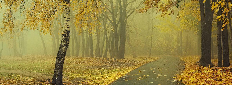 Листопад-листопад