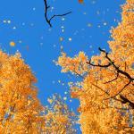 Листопад — листопад