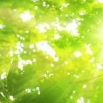 И солнце сквозь листву