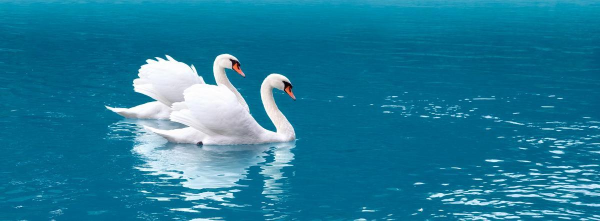 Шесть лебедей - сказка