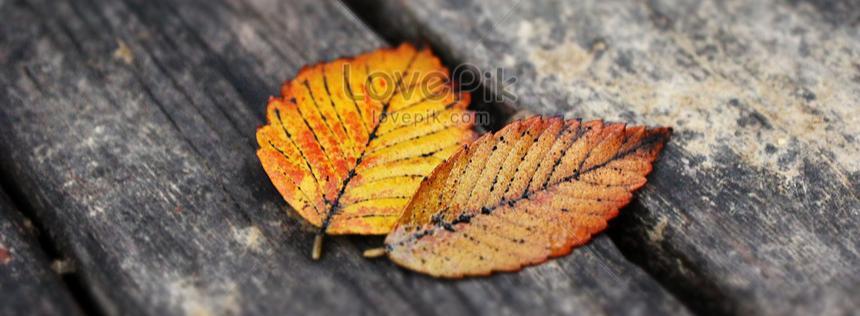 Листья стали сухими и желтыми