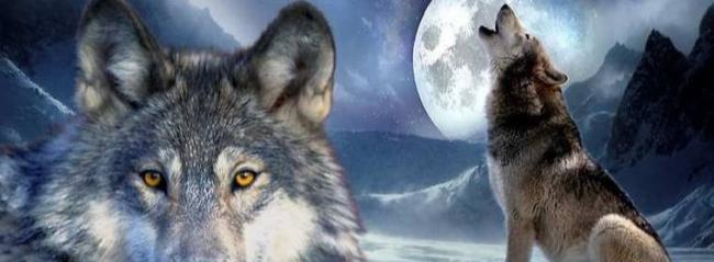 Человек человеку — волк