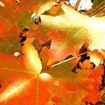 Осень сказочная явь