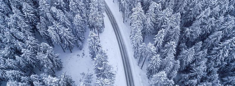 Ёлко-птицы - пейзажная лирика, зима, сказка, фэнтези