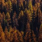 Осеннее