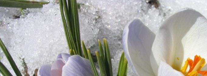 На белоснежности холодной