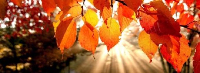 Старушка-осень