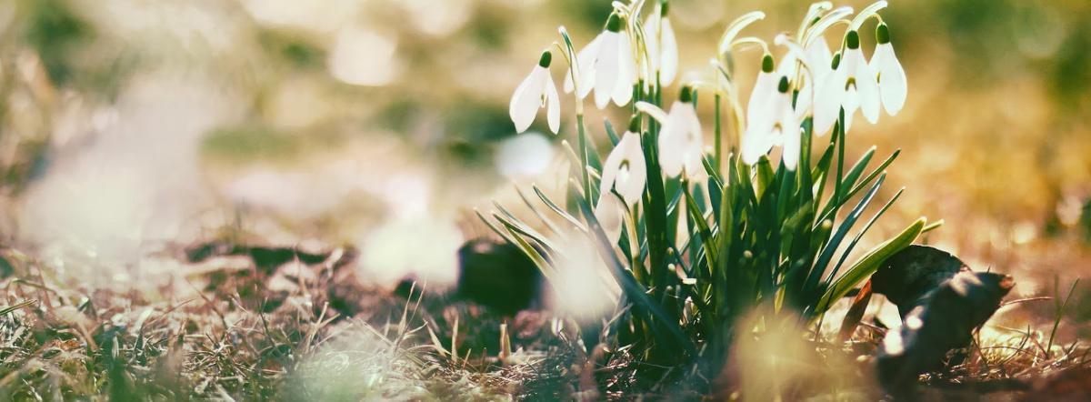 О, весна без конца и без краю
