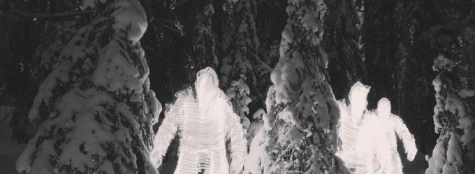 Лес в феврале