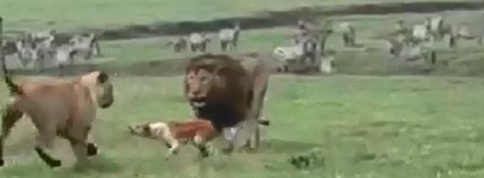 Собачий Афро-Майдан