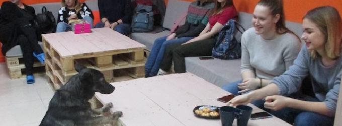 Dog House Новосибирска - юмор