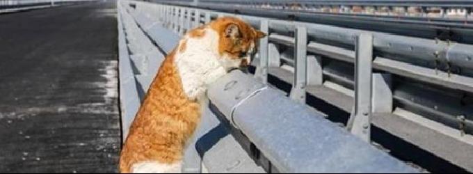 Кот Мостик открывает трассу - пародияюмор