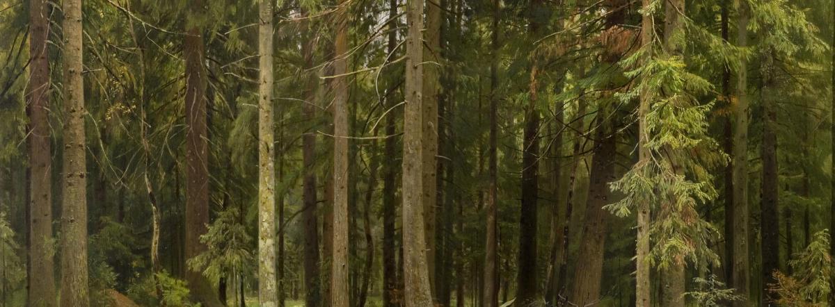 Этажи леса - пришвин михаил михайлович, сказка