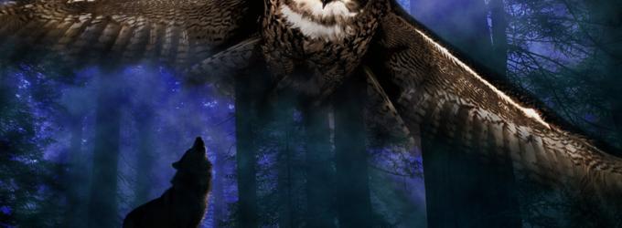 Ночь-птица