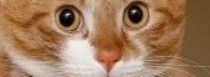 Дачному коту