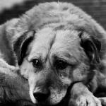Гимн бродячего пса