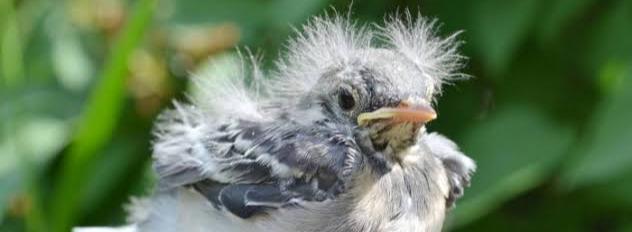 О птенце - взросление, детство, психология, отцыидети, о жизни