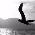 про альбатросов