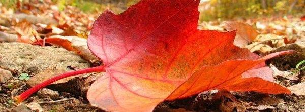 Осень любви