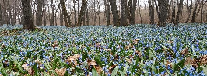 Весна приходит незаметно