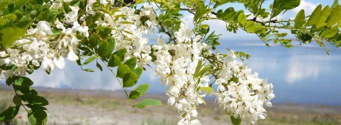 Весна (акростих)