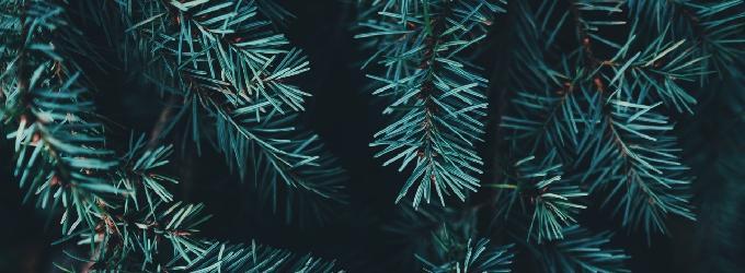 Будь как ёлка - - о жизни, ёлека, дерево