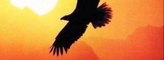 Парила птица над крылом заката