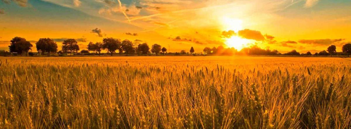 Позови меня, поле спелое