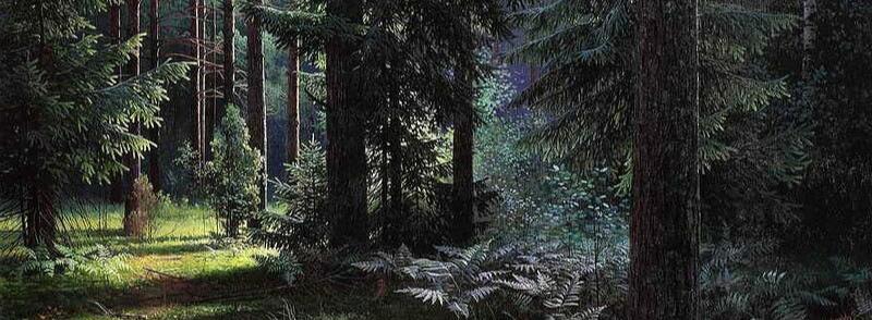 Люблю я лес вечернею порою