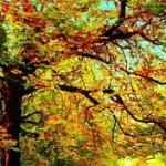 Осенний сонет